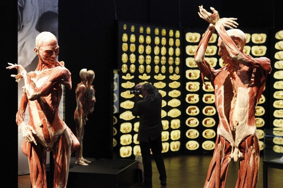 15. NIEMCY, Offenbach, 25 marca 2010: Ludzkie ciała, w pozach charakterystycznych dla flamenco, spreparowane metodą plastynacji. AFP PHOTO DDP / MARIO VEDDER