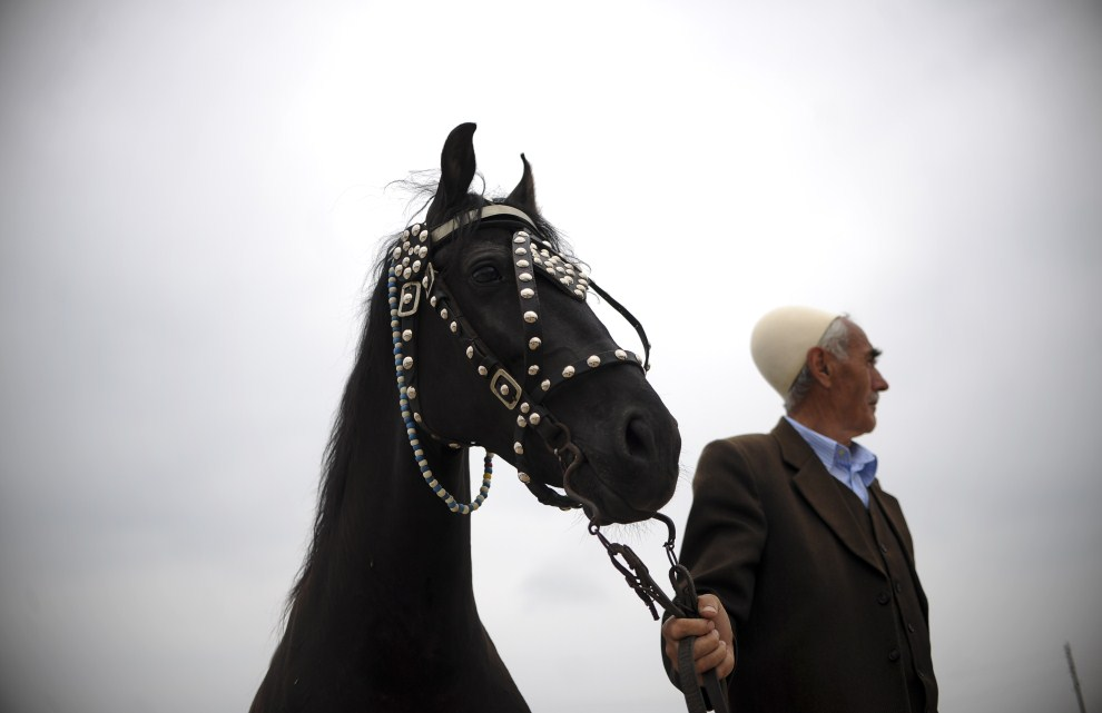 11. SERBIA, Mazgit, 29 maja 2011: Kosowski Albańczyk trzyma konia przed startem wyścigu. AFP PHOTO/ARMEND NIMANI