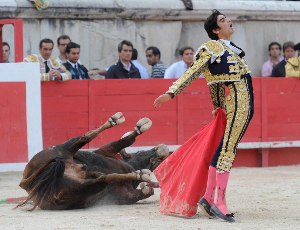 14. FRANCJA, Nîmes, 10 czerwca 2011: Miguel Angel Perera po zakończoenj walce z bykiem. AFP PHOTO / PASCAL GUYOT