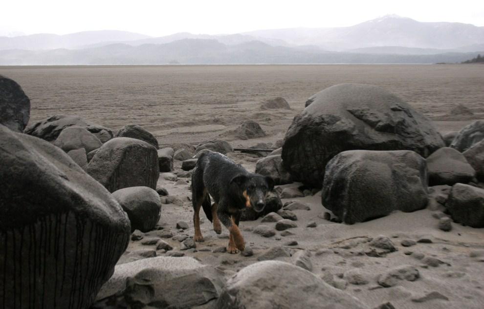 19. ARGENTYNA, Bariloche, 7 czerwca 2011: Pies na plaży nad jeziorem Nahuel Huapi. AFP PHOTO/FRANCISCO RAMOS MEJIA