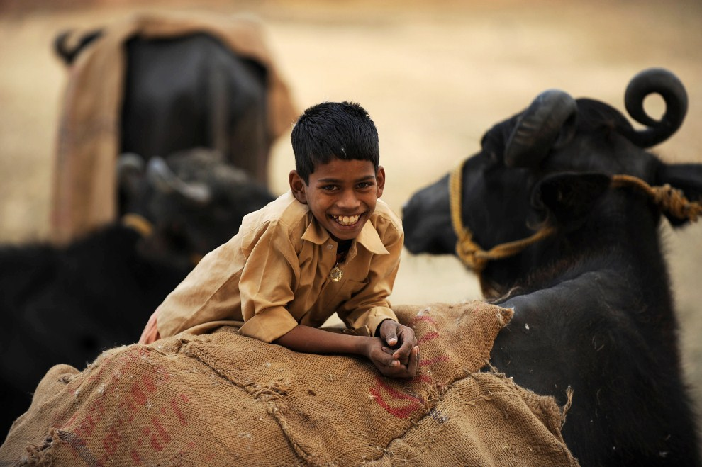5. INDIE, Allahabad, 21 grudnia 2010: Chłopiec wypasający krowy na przedmieściach  Allahabadu. AFP PHOTO/Diptendu DUTTA