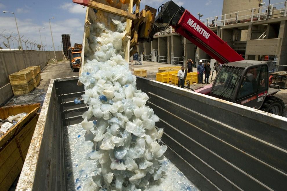 16. IZRAEL, Hadera, 5 lipca 2011: Usuwanie meduz, które zablokowały dopływ wody do elektrowni w mieście Hadera. AFP PHOTO / JACK GUEZ