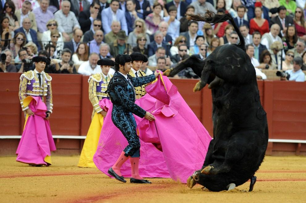 18. HISZPANIA, Sewilla, 6 maja 2011: Toreadorzy w trakcie walki z bykiem. AFP PHOTO/ CRISTINA QUICLER