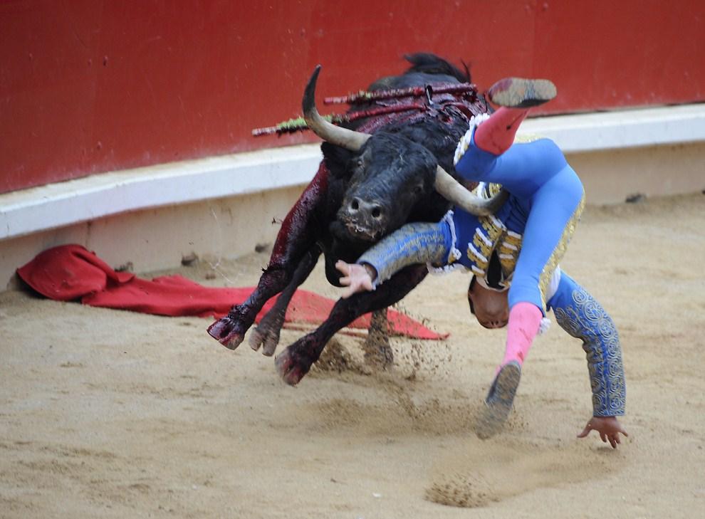 "19. HISZPANIA, Pampeluna, 13 lipca 2011: Matador o pseudonimie  ""El Cid"" podrzucany przez szarżującego byka. AFP PHOTO / ANDER GILLENEA"