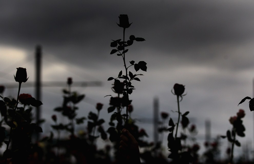 24. NORWEGIA, Oslo, 25 lipca 2011: Kwiaty w centrum Oslo, gdzie w miniony piątek doszło do zamachu bombowego. (Foto: Jeff J Mitchell/Getty Images)