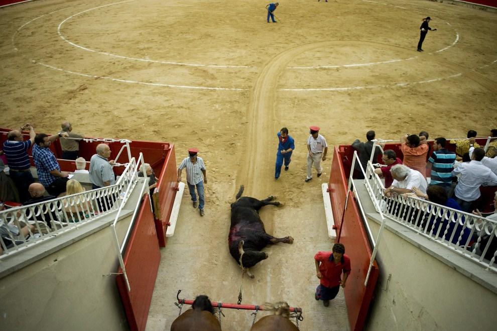 27. HISZPANIA, Barcelona, 10 lipca 2011: Martwy byk ściągany z areny. (Foto:  David Ramos/Getty Images)