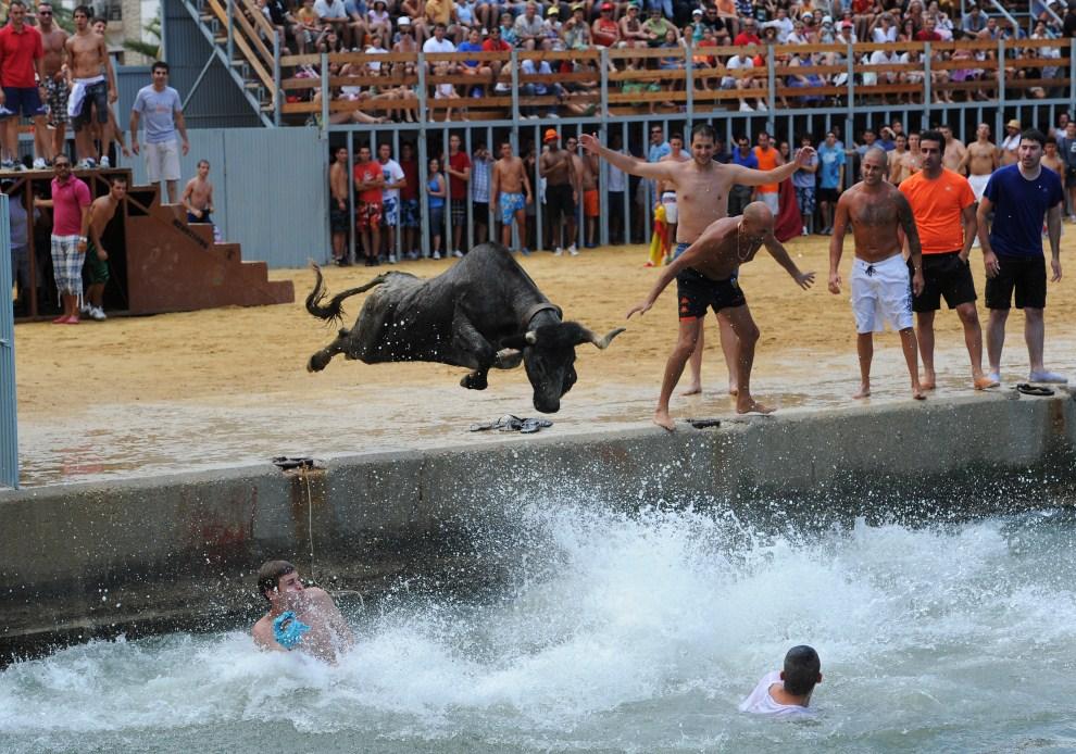 """4. HSZPANIA, Denia, 14 lipca 2011: Byk ścigający ludzi wskakuje do morza w trakcie """"Bous a la Mar"""". (Foto: Jasper Juinen/Getty Images)"""