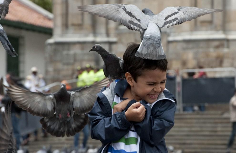 9. KOLUMBIA, Bogotá, 22 lipca 2011: Chłopiec karmiący gołębie na Placu Bolivara. AFP PHOTO/Luis Acosta