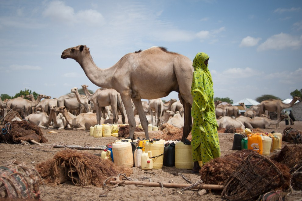 6th SOMALIA, Dhobley, 11 August 2011: Somali near water containers prepared for transportation on the backs of camels. AFP PHOTO / PHIL MOORE