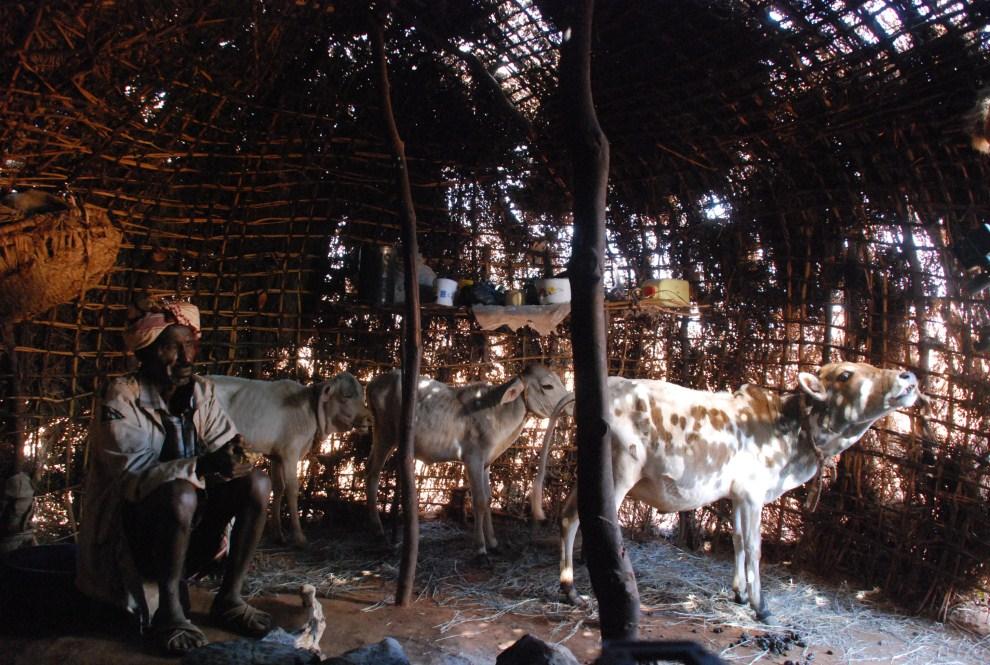8. KENIA, Funanqumbi, 24 lipca 2011: Galgalo Wato pilnuje trzech ostatnich sztuk bydła jakie pozostały ze stada liczącego 120 osobników. AFP PHOTO/ PETER MARTELL