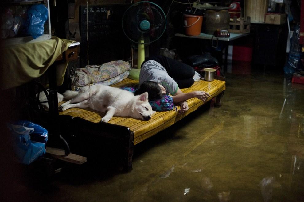10. TAJLANDIA, Bangkok, 27 października 2011: Kobieta z psem śpią w zalanym przez rzekę mieszkaniu. AFP PHOTO/ Nicolas ASFOURI