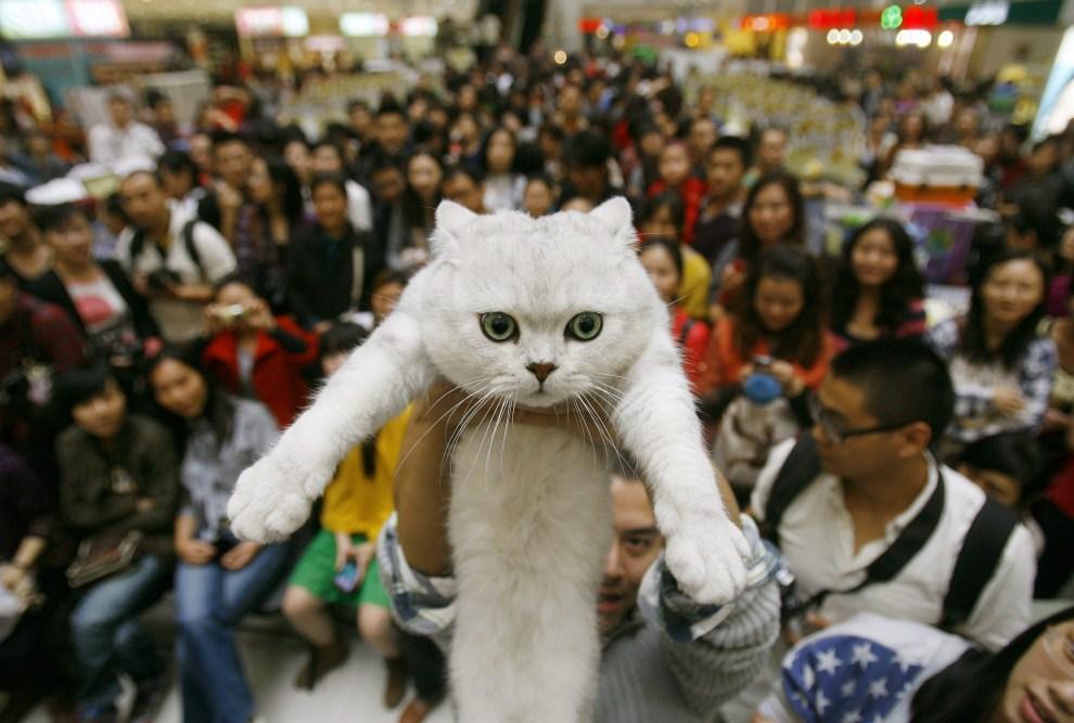 15. CHINY, Wuhan, 23 października 2011: Kot na wystawie zwierząt w Wuhan. AFP PHOTO