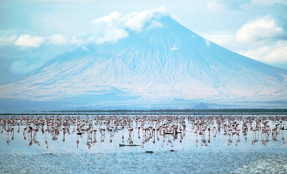 16.TANZANIA, Jezioro Natron, 30 września 2011: Flamingi brodzące w Jeziorze Natron u podnóża góry Ol Doinyo Lengai. AFP PHOTO/TONY KARUMBA