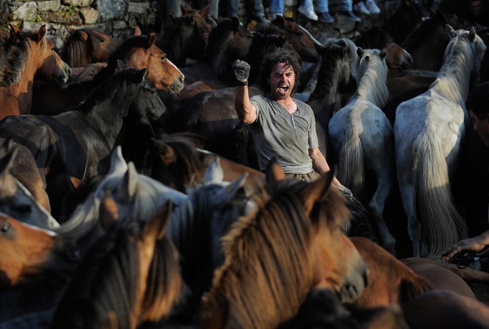 """30.HISZPANIA, Sabucedo, 2 lipca 2011: Spęd koni w czasie tradycyjnego """"Rapa das Bestas"""". (Foto:  Denis Doyle/Getty Images)"""