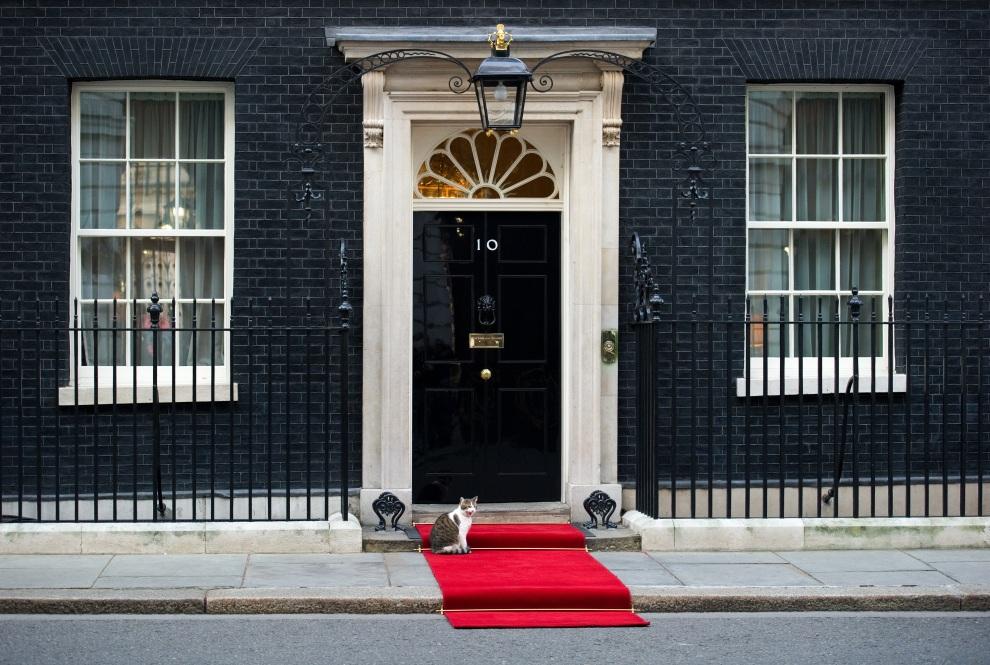 5.UWIELKA BRYTANIA, Londyn, 16 stycznia 2012: Larry, kot z Downing Street, siedzi przed  rezydencją i biurem premiera Wielkiej Brytanii. AFP PHOTO / LEON NEAL