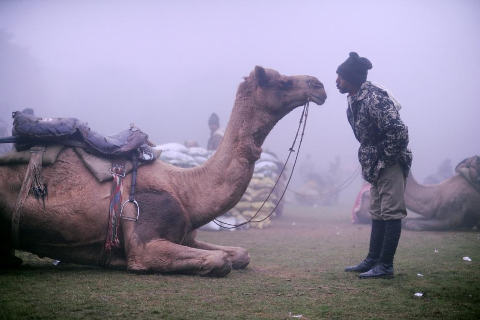 7.INDIE, New Delhi, 18 stycznia 2012: Funkcjonariusz straży granicznej rozmawia z wielbłądem. AFP PHOTO / ROBERTO SCHMIDT