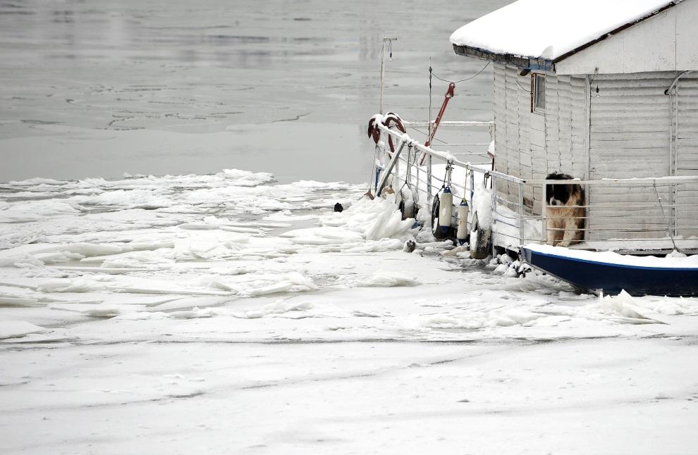 23.SERBIA, Belgrad, 5 lutego 2012: Pies szukający schronienia na łodzi nad zamarzniętą Sawą. AFP PHOTO / ANDREJ ISAKOVIC