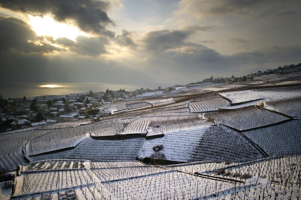 29.SZWAJCARIA, Aran, 31 stycznia 2012: Przykryte śniegiem winnice w Aran. AFP PHOTO / FABRICE COFFRINI