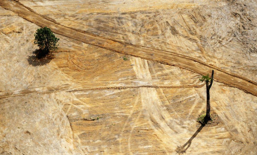 7.BRAZYLIA, Altamira, 15 czerwca 2012: Miejsce wycinki drzew pod budowę zapory Melo Monte. (FotoMario Tama/Getty Images)