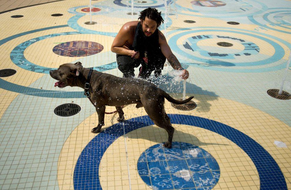 13.USA, Waszyngton, 22 czerwca 2012: Bryan Moran chłodzi swojego psa wodą z fontanny. AFP PHOTO/Brendan SMIALOWSKI