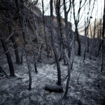 Pożary na południu