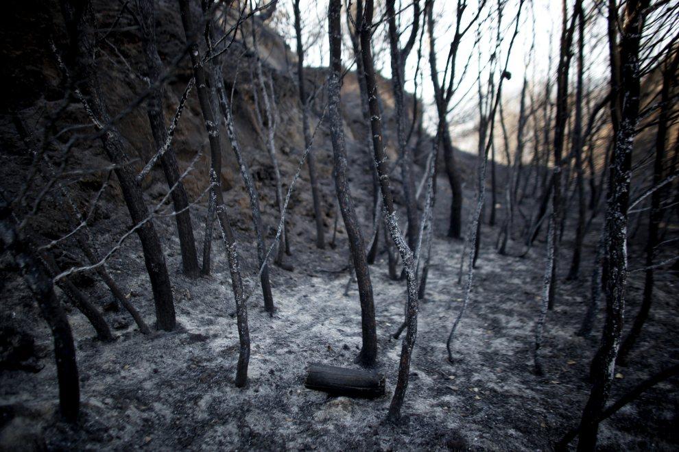 1.GRECJA, Patras, 19 lipca 2012: Spalony fragment lasu w okolicy miejscowości Patras. AFP / Angelos Tzortzinis