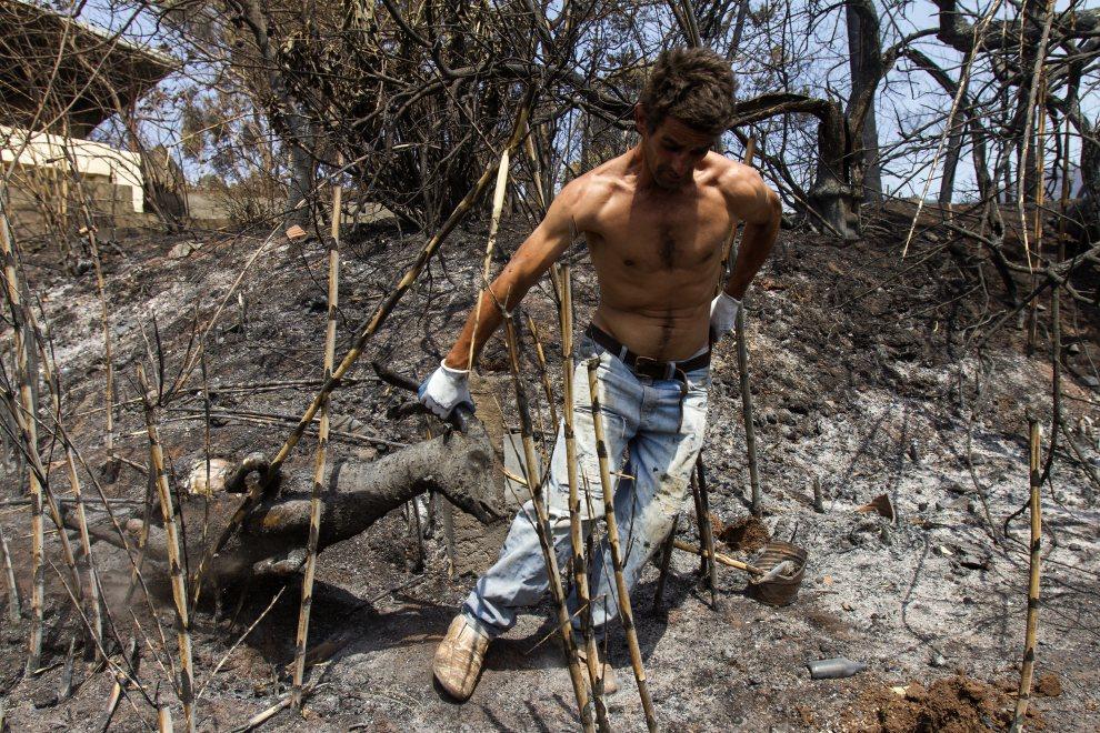 30.PORTUGALIA, Gaula, 21 lipca 2012: Mężczyzna usuwa z posesji martwego kozła. AFP PHOTO / GREGORIO CUNHA