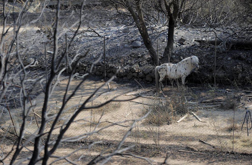 32.HISZPANIA, La Jonquera, 23 lipca 2012: Kucyk w zagrodzie spalonego domu. AFP PHOTO / JOSEP LAGO