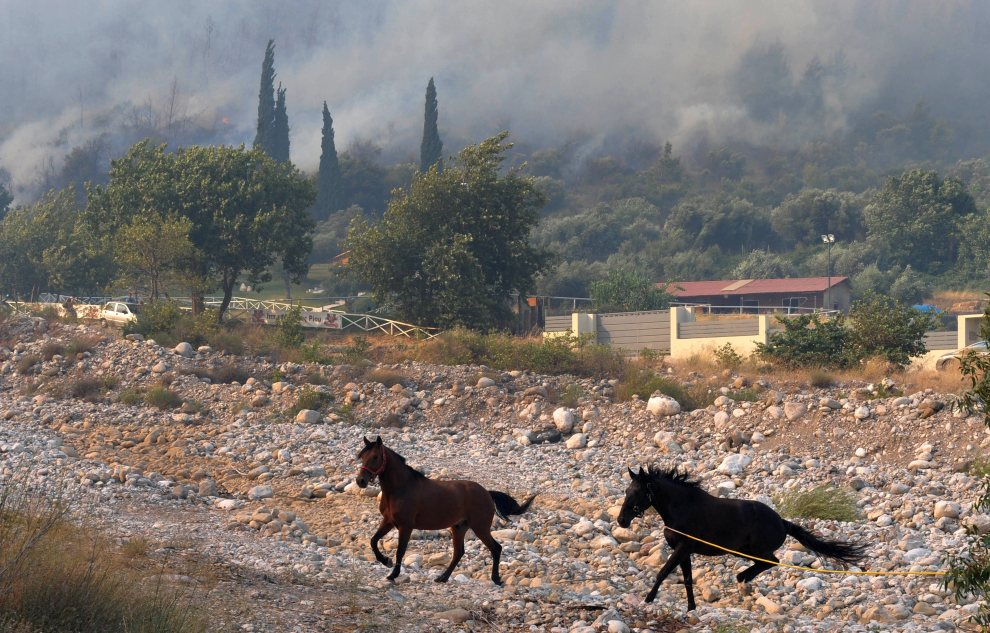 33.GRECJA, Patras, 18 lipca 2012: Konie z klubu jeździeckiego uciekają przed pożarem. AFP PHOTO / GIOTA KORBAKI
