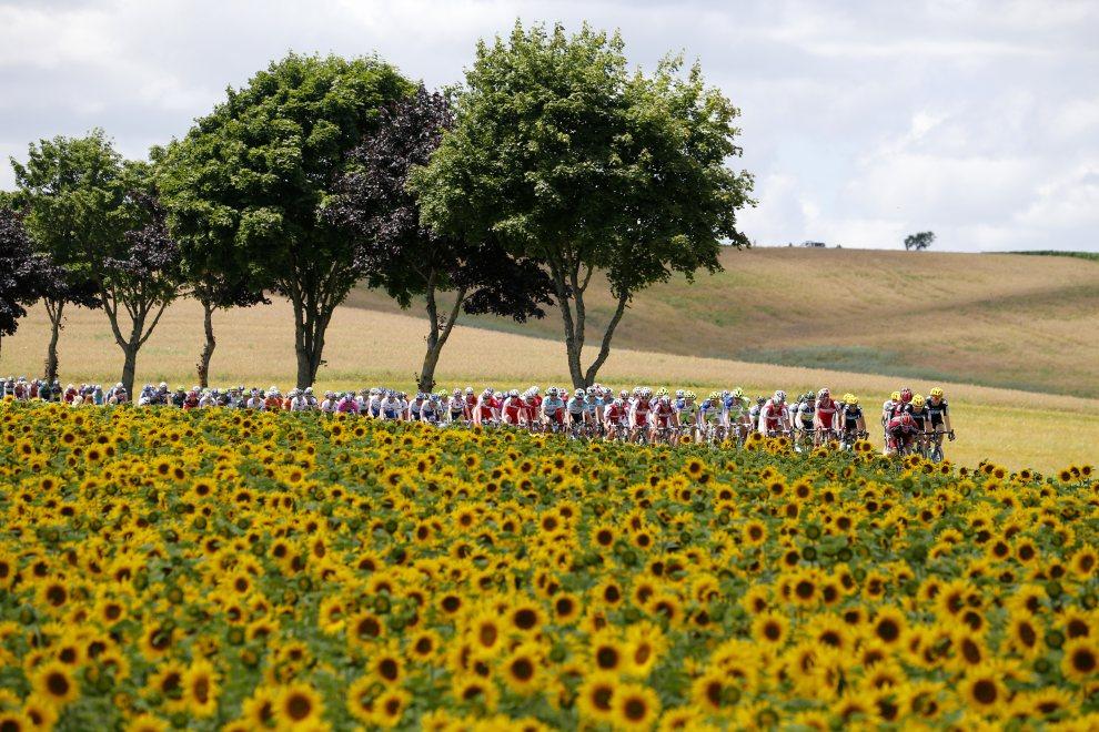 40.FRANCJA, Plancher-les-Mines, 7 lipca 2012: Peleton przejeżdża przez pola słoneczników.  AFP PHOTO / JOEL SAGET
