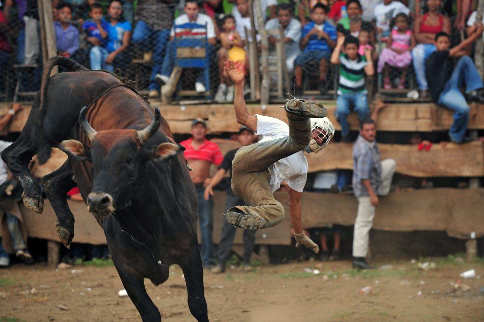 12.NIKARAGUA, Managua, 29 lipca 2012: Mężczyzna spadający z byka podczas rodeo. AFP PHOTO/Hector RETAMAL