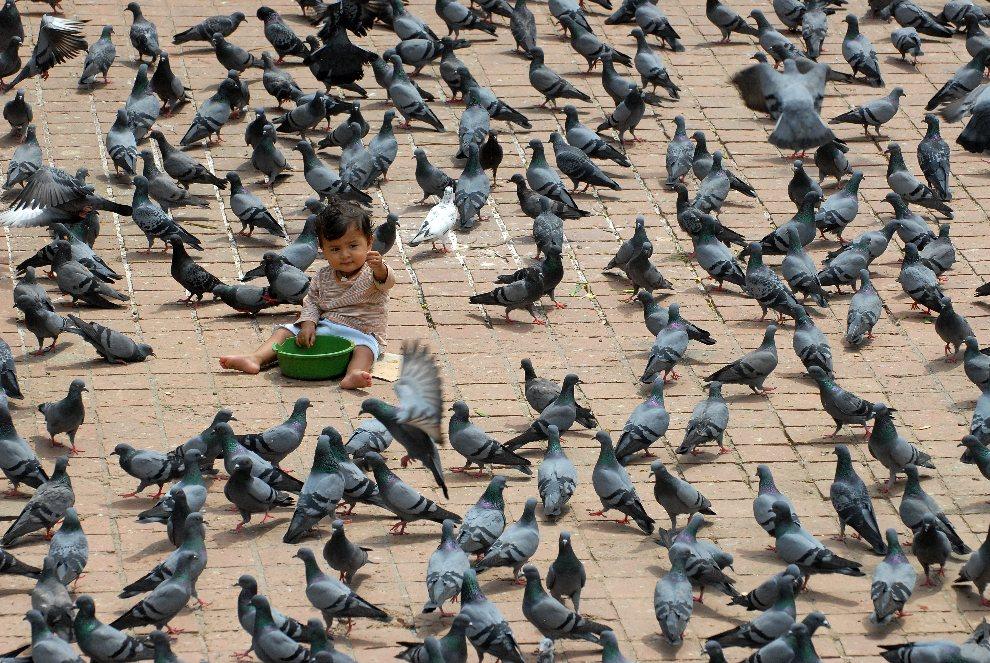 13.NEPAL, Katmandu, 6 września 2012: Małe dziecko pośród stada gołębi na placu Durbar w Katmandu. AFP PHOTO/ Prakash MATHEMA