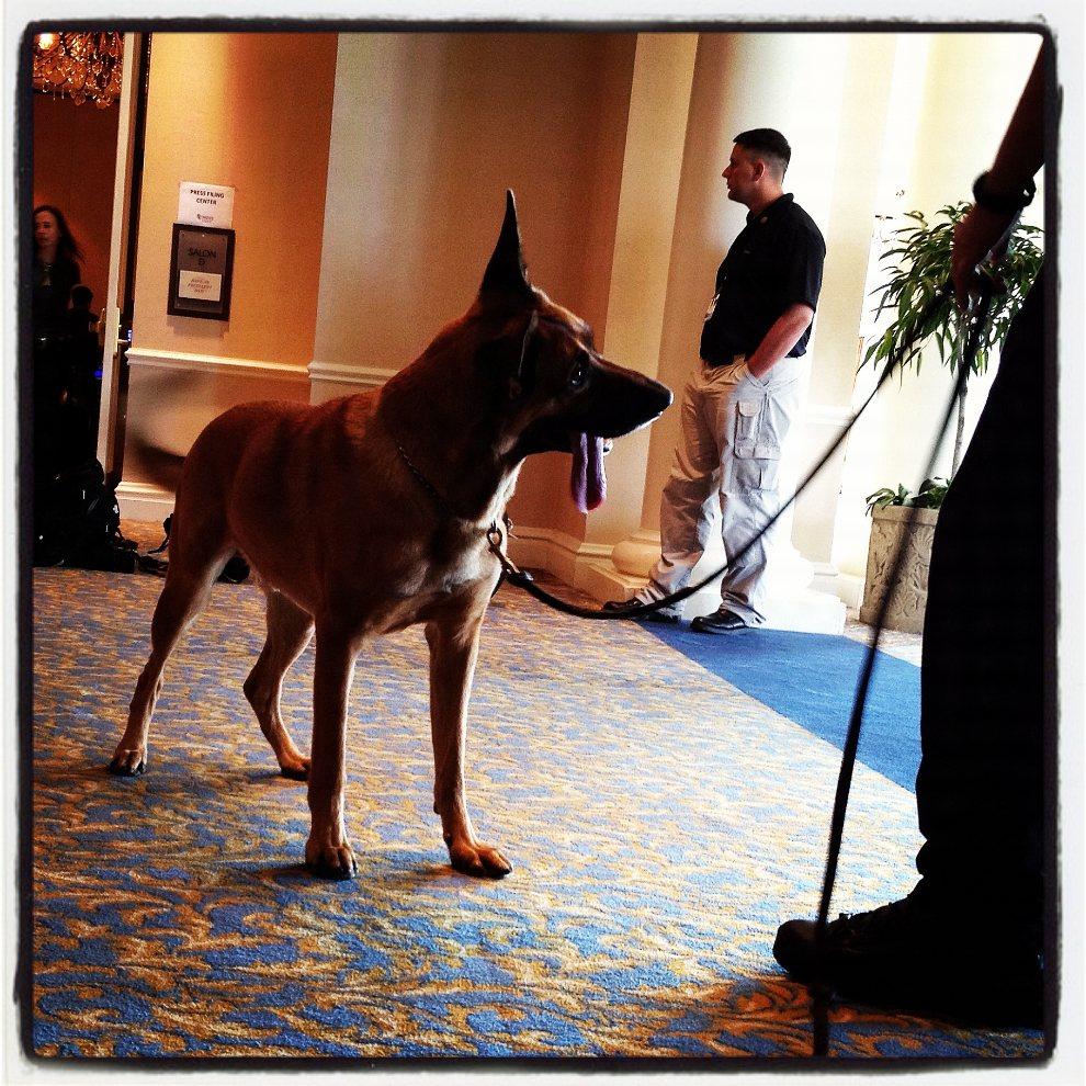 13.USA, Tampa, 30 sierpnia 2012: Agent Secret Service z psem w Marriott Tampa Waterside podczas konwencji Partii Republikańskiej. (Foto: Justin Sullivan/Getty   Images)