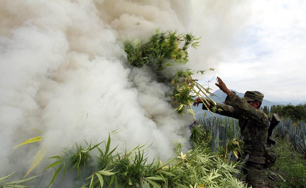 24.MEKSYK, Hostotipaquillo, 27 września 2012: Żołnierz pali konopie znalezione pośród upraw agawy. AFP PHOTO / Hector Guerrero