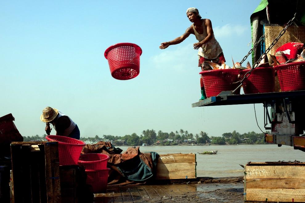 13.MJANMA, Rangun, 9 grudnia 2010: Załadunek ryb na targu San Pya. (Foto:  Drn/Getty Images)