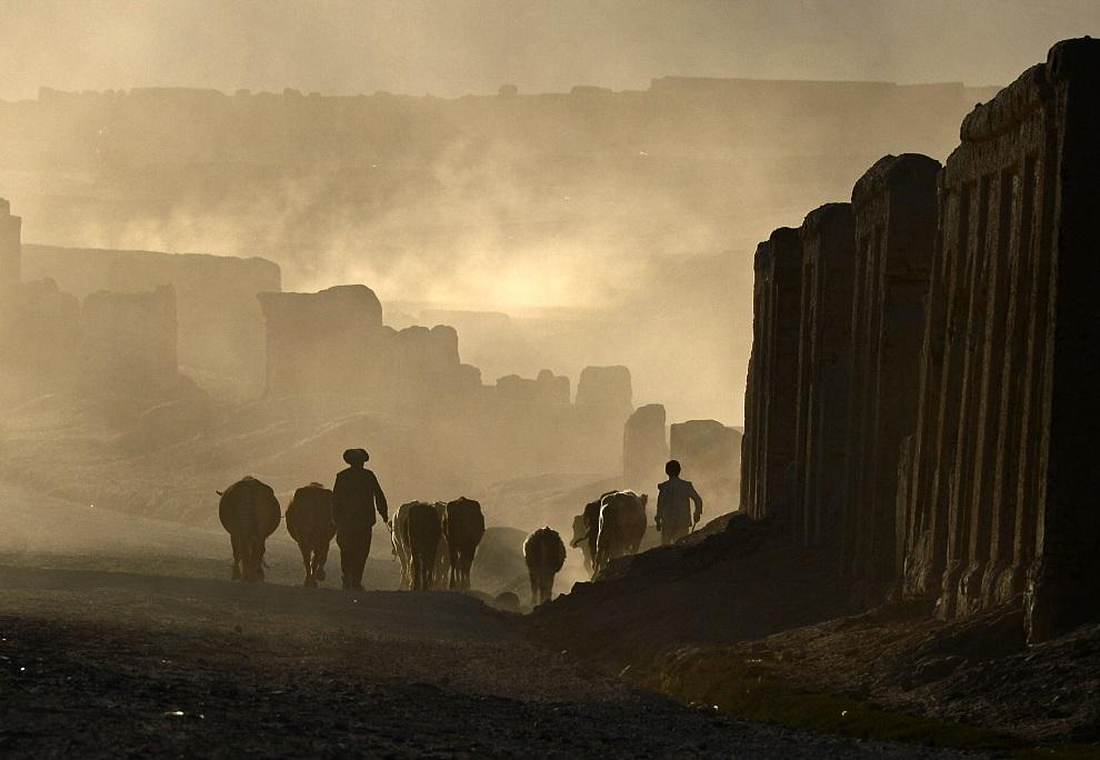 16.AFGANISTAN, Bamiyan, 21 października 2012: Chazar prowadzący swoje stado. AFP PHOTO / Massoud HOSSAINI