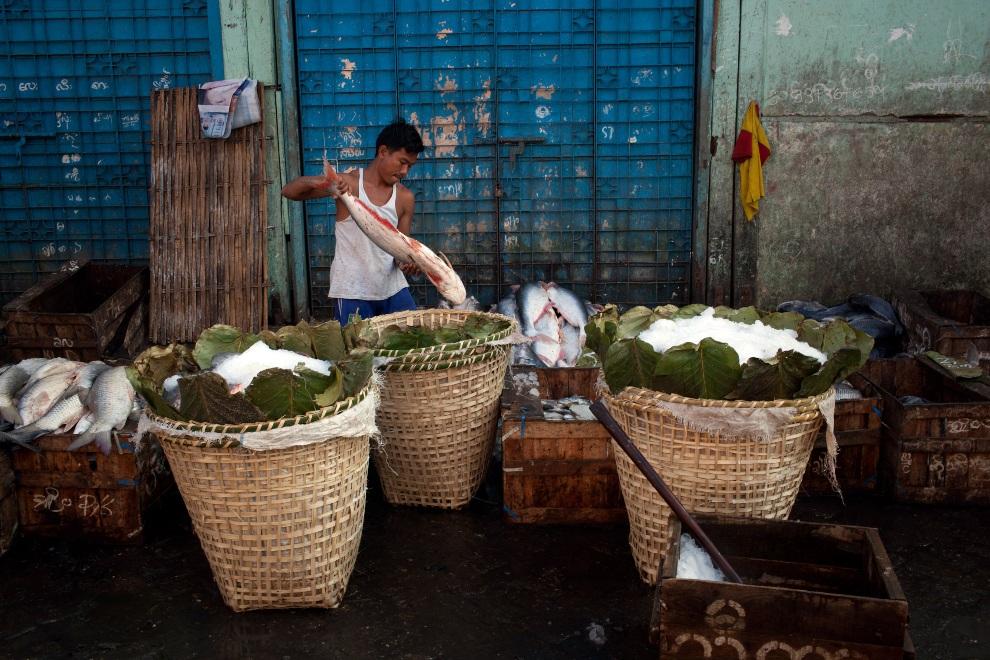21.MJANMA, Rangun, 9 grudnia 2010: Mężczyzna rozdziela złowione ryby. (Foto:  Drn/Getty Images)