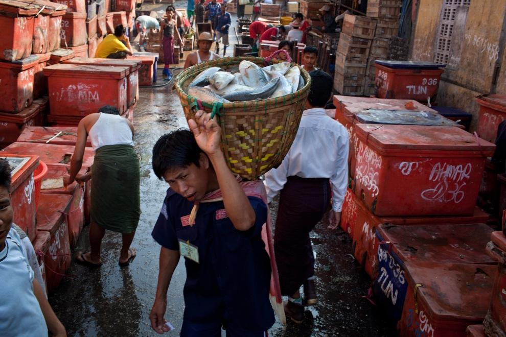 23.MJANMA, Rangun, 9 grudnia 2010: Mężczyźni zatrudnieni przy targu rybnym San Pya. (Foto:  Drn/Getty Images)