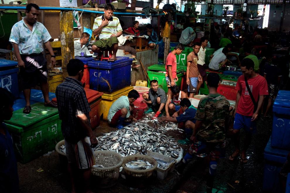 26.MJANMA, Rangun, 9 grudnia 2010: Sortowanie ryb w jednej z hal targu rybnego. (Foto:  Drn/Getty Images)