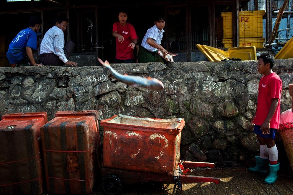 2.MJANMA, Rangun, 9 grudnia 2010: Mężczyźni pracujący przy rozładunku ryb. (Foto:  Drn/Getty Images)