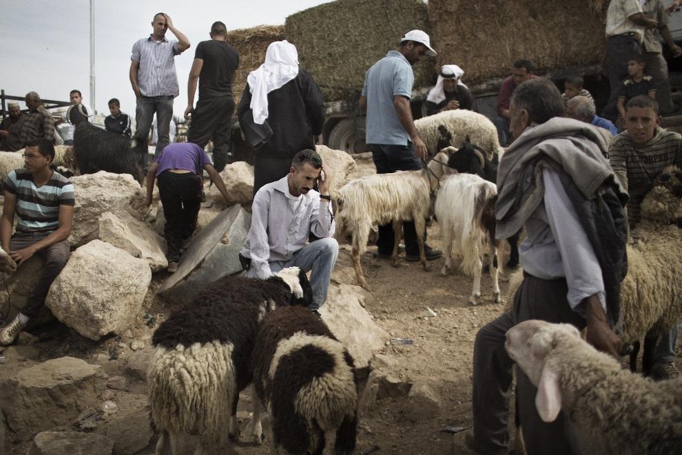3.AUTONOMIA PALESTYŃSKA, Betlejem, 24 października 2012: Palestyńczycy na targu zwierząt przed rozpoczęciem  święta Eid al-Adha. AFP PHOTO/MARCO LONGARI