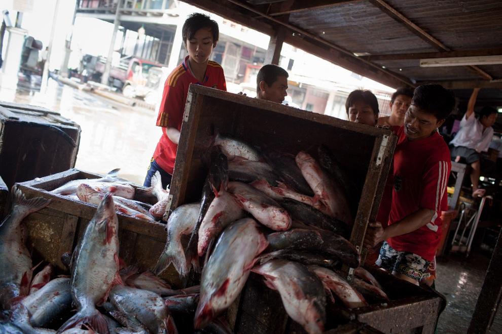 5.MJANMA, Rangun, 9 grudnia 2010: Pracownicy portowi zatrudnieni przy targu rybnym. (Foto:  Drn/Getty Images)