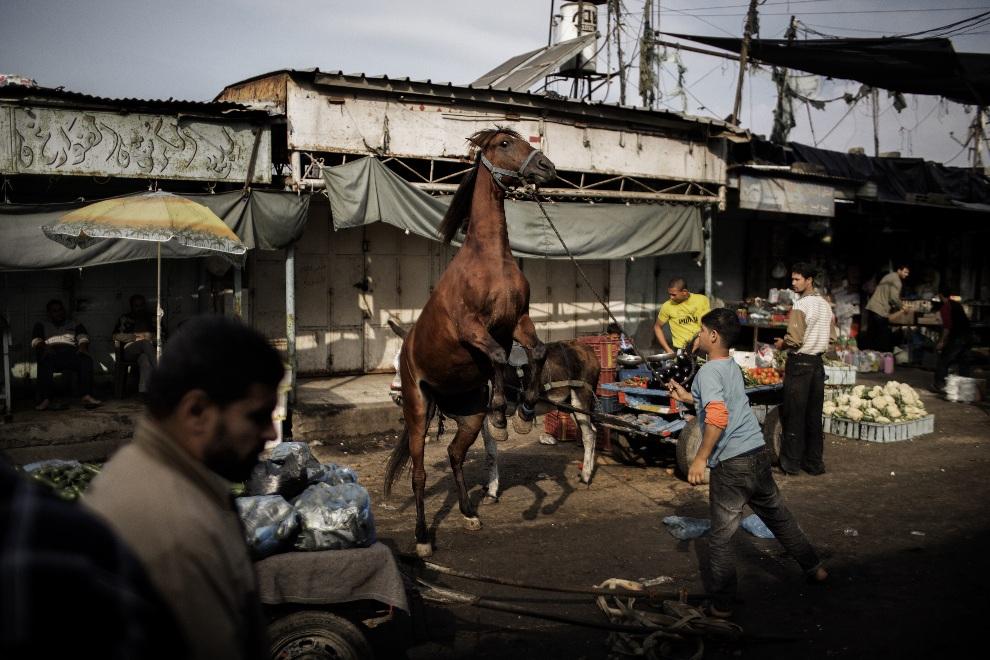15.STREFA GAZY, 19 listopada 2012: Chłopiec stara się utrzymać narowistego konia. AFP PHOTO/MARCO LONGARI