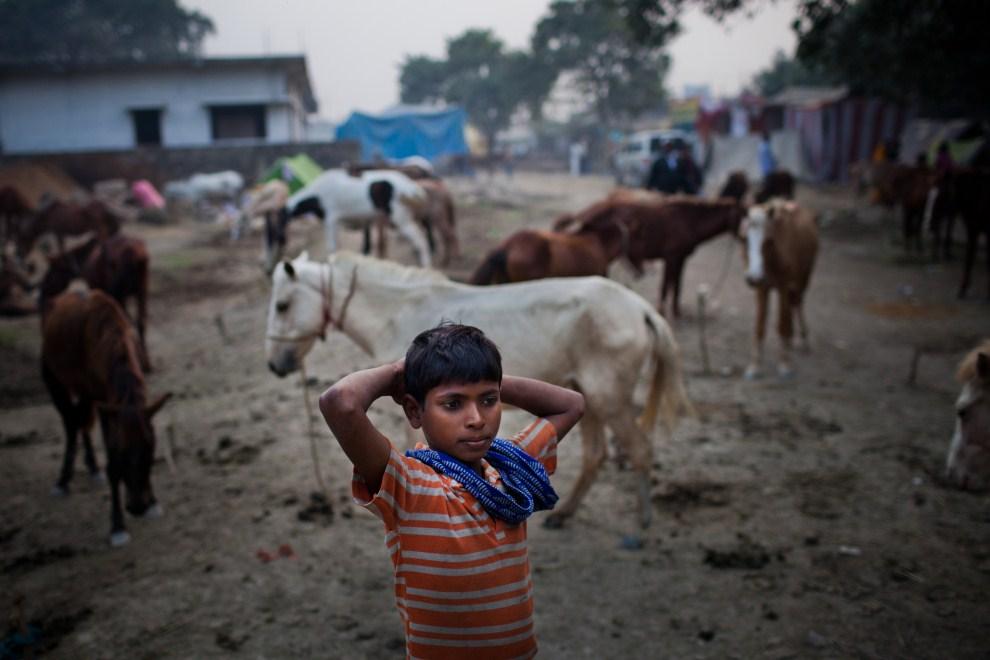 17.INDIE, Sonepur, 17 listopada 2011: Govin Kumar, dziesięcioletni opiekun koni. (Foto: Daniel Berehulak/Getty Images)