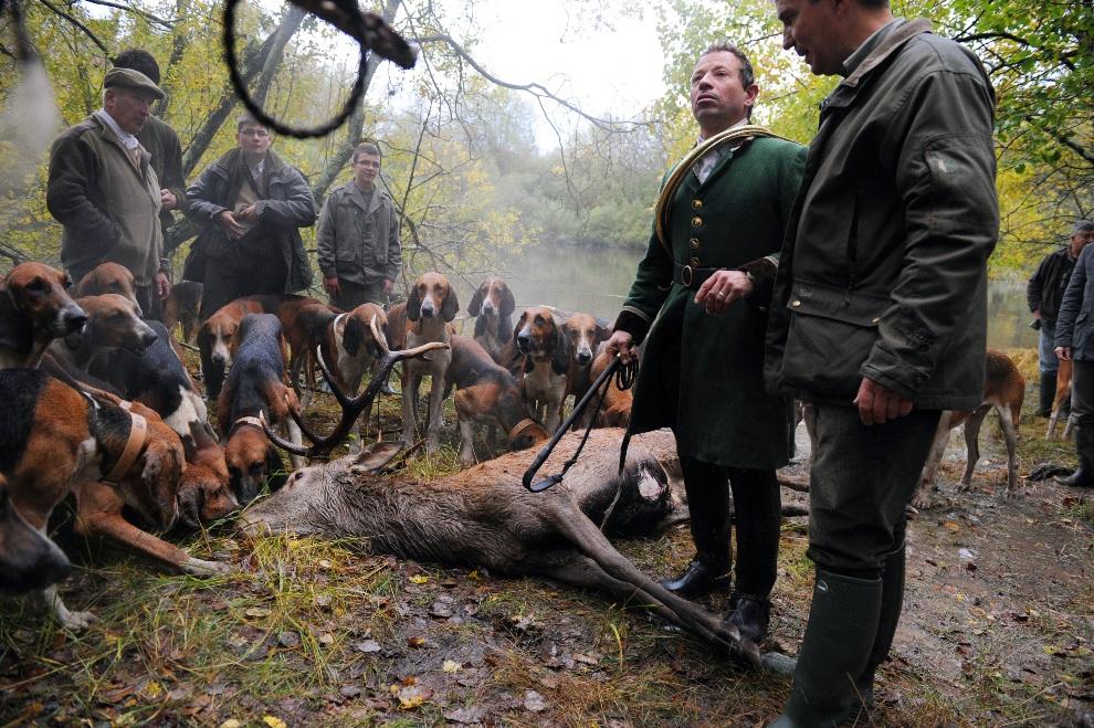 21.FRANCJA, Amboise, 3 listopada 2012: Jeleń zabity w trakcie polowania. AFP PHOTO/ ALAIN JOCARD