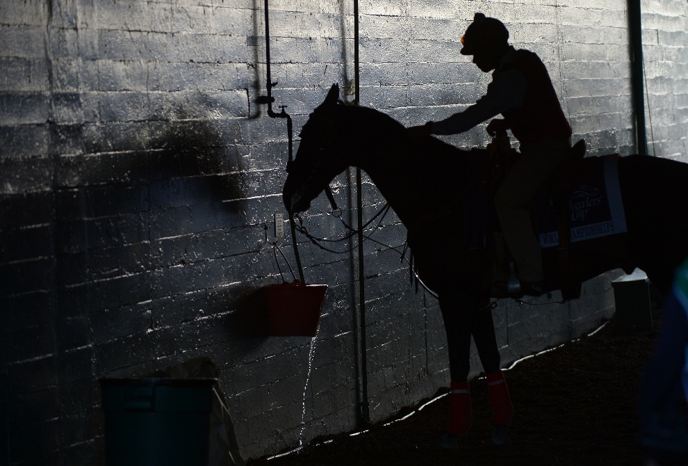 22.USA, Arcadia, 2 listopada 2012: Dżokej poi swojego konia na Santa Anita. AFP PHOTO / /JOE KLAMAR