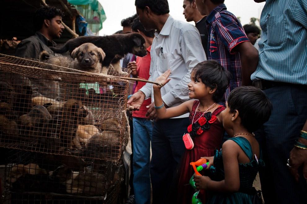 22.INDIE, Sonepur, 16 listopada 2011: Dzieci przyglądają się sprzedawanym szczeniętom. (Foto: Daniel Berehulak/Getty Images)