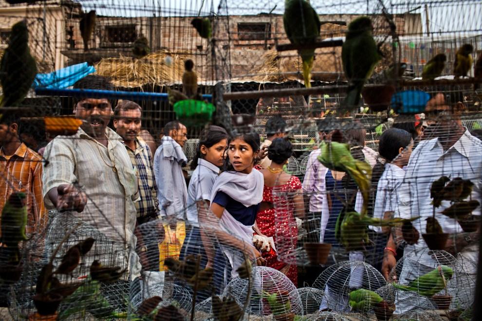 23.INDIE, Sonepur, 16 listopada 2011: Ludzie przechodzący obok klatek z ptakami. (Foto: Daniel Berehulak/Getty Images)