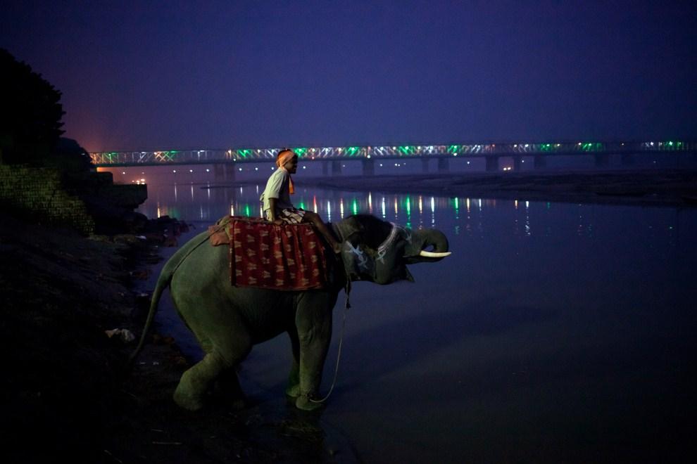 27.INDIE, Sonepur, 14 listopada 2011: Mahut pojący słonia w Gangesie. (Foto: Daniel Berehulak/Getty Images)