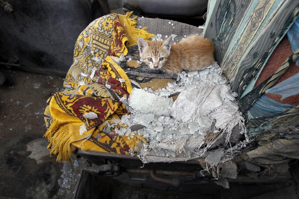 32.STREFA GAZY, 18 listopada 2012: Kot na siedzeniu w samochodzie uszkodzonym podczas ekspolizji. AFP PHOTO/MOHAMMED ABED